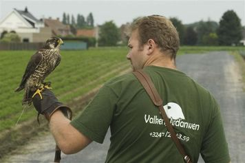 Valkerij Ardanwen - Foto's - Valken